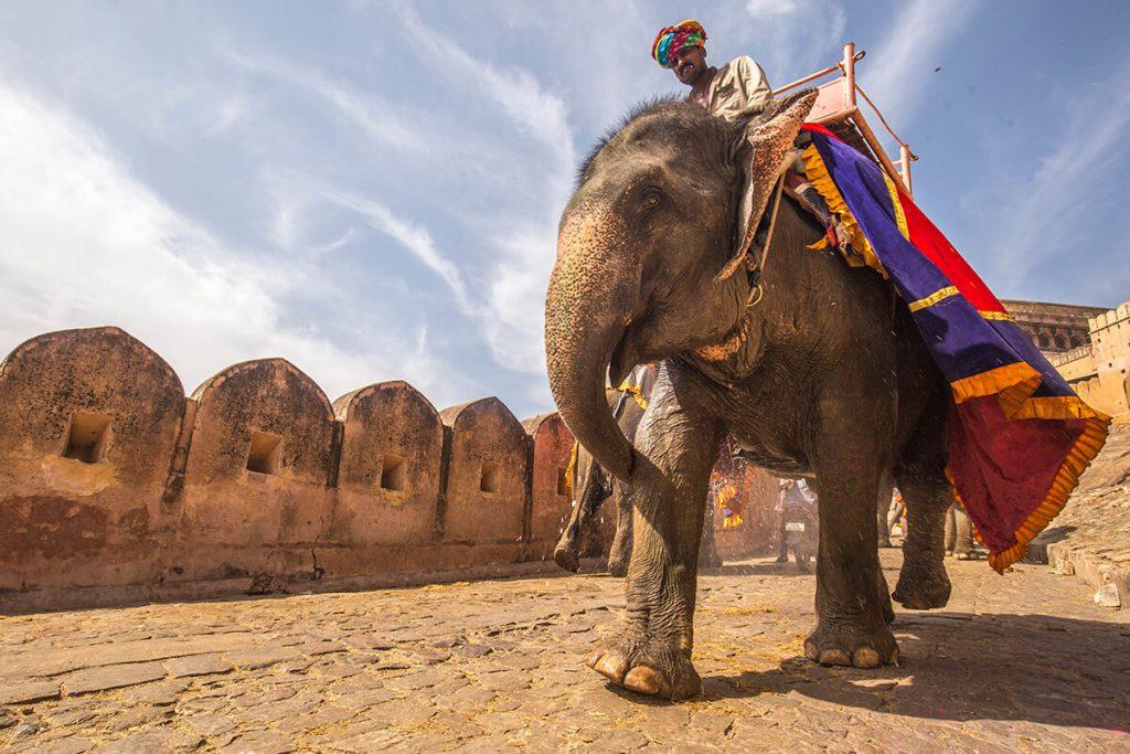 actividades viaje india