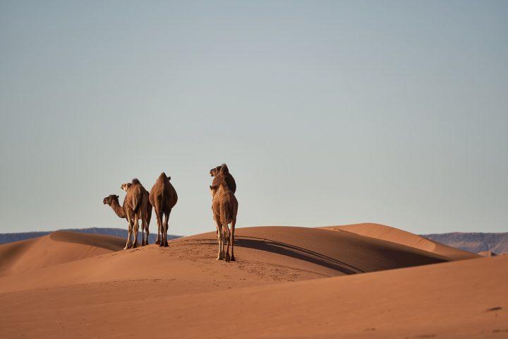 el roaming en marruecos