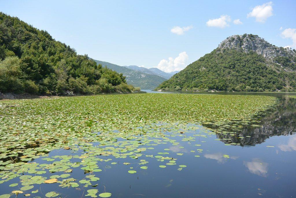 lago skadar en albania con montenegro
