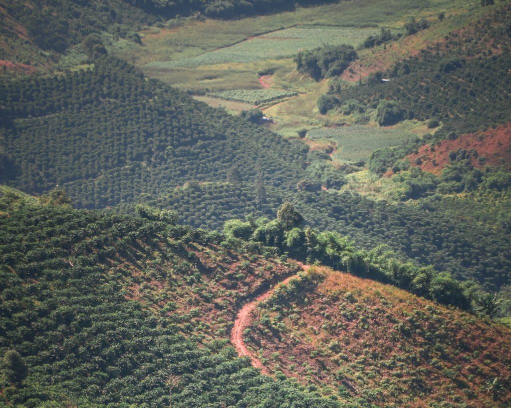 cultivo arboles cafe en vietnam vista paisaje