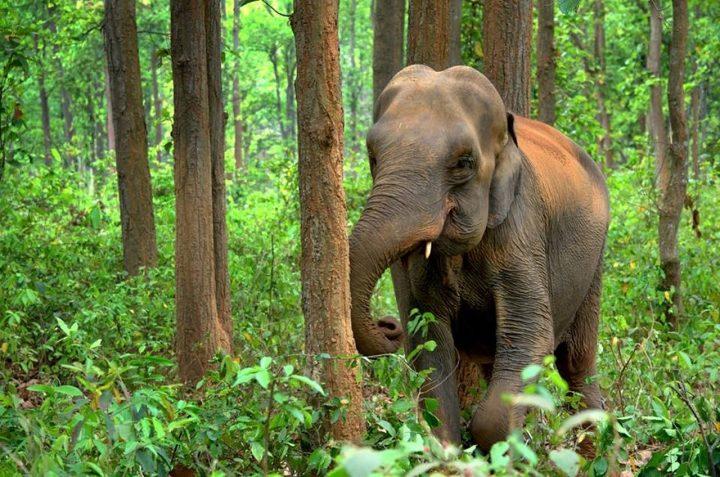 que ver en la india elefantes monumentos y parques